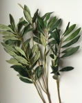 Оливковая ветвь