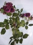 """Роза """"Эмили"""" фиолетовая 65 см"""