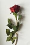 """Роза """"даймонд"""""""