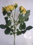 Филомения роза желтая 63 см