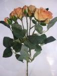 Филомения роза персиковая 63 см